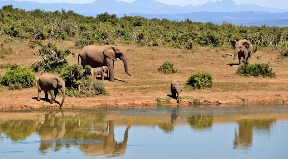Unsere Safari